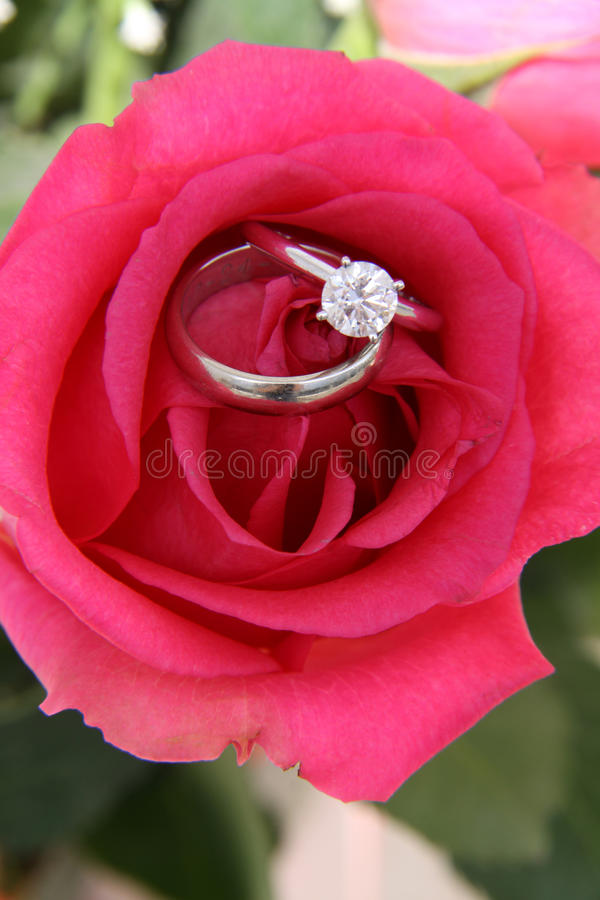 Rose and Wedding rings stock photo