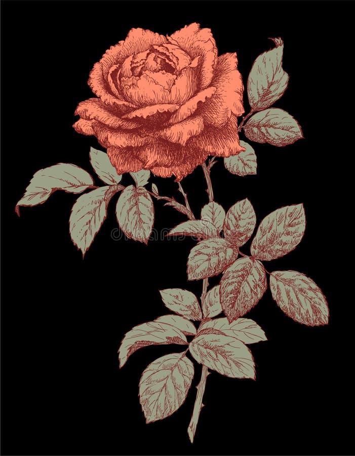 rose wektora ilustracji