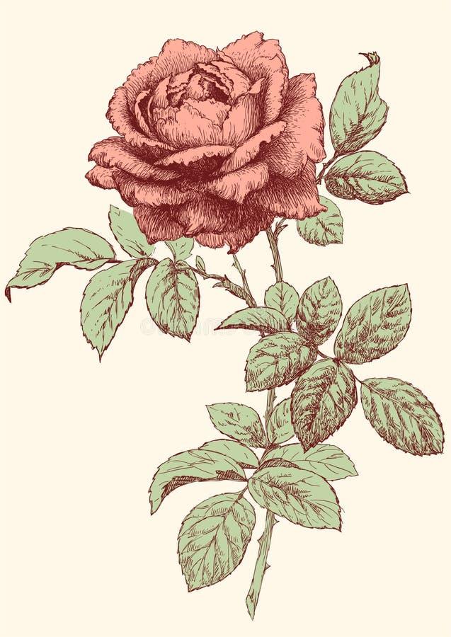 rose wektora royalty ilustracja
