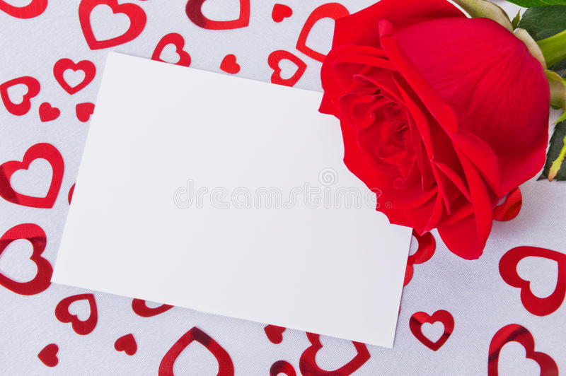 Rose on a white background stock photography