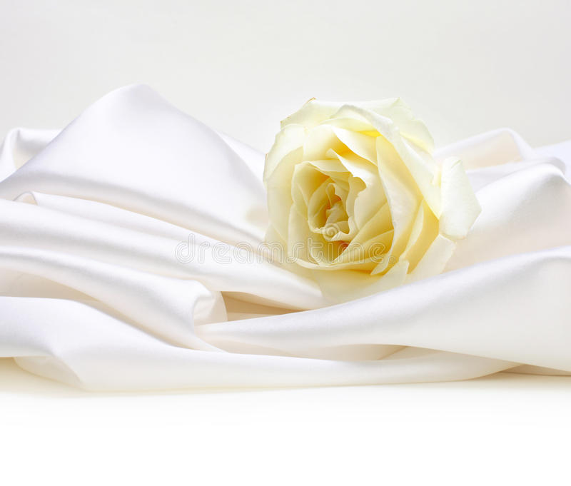 Download Rose on white silk stock image. Image of satin, shine - 26896925