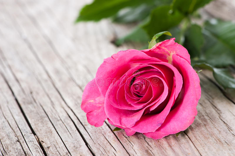 Rose on wood. Pink rose on wooden background royalty free stock image