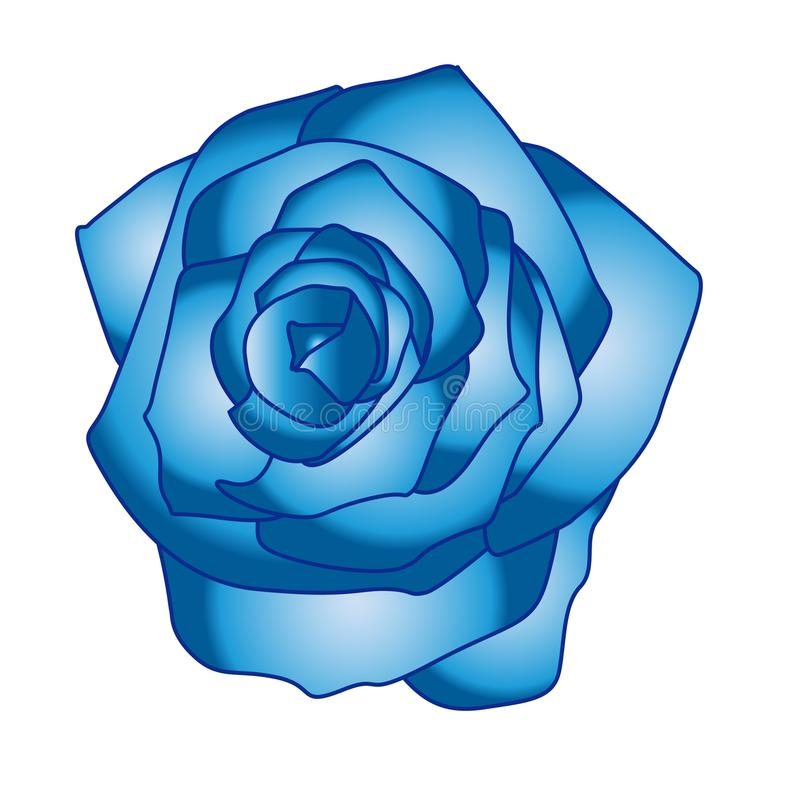 Beautiful Blue Rose Vector Colour royalty free illustration