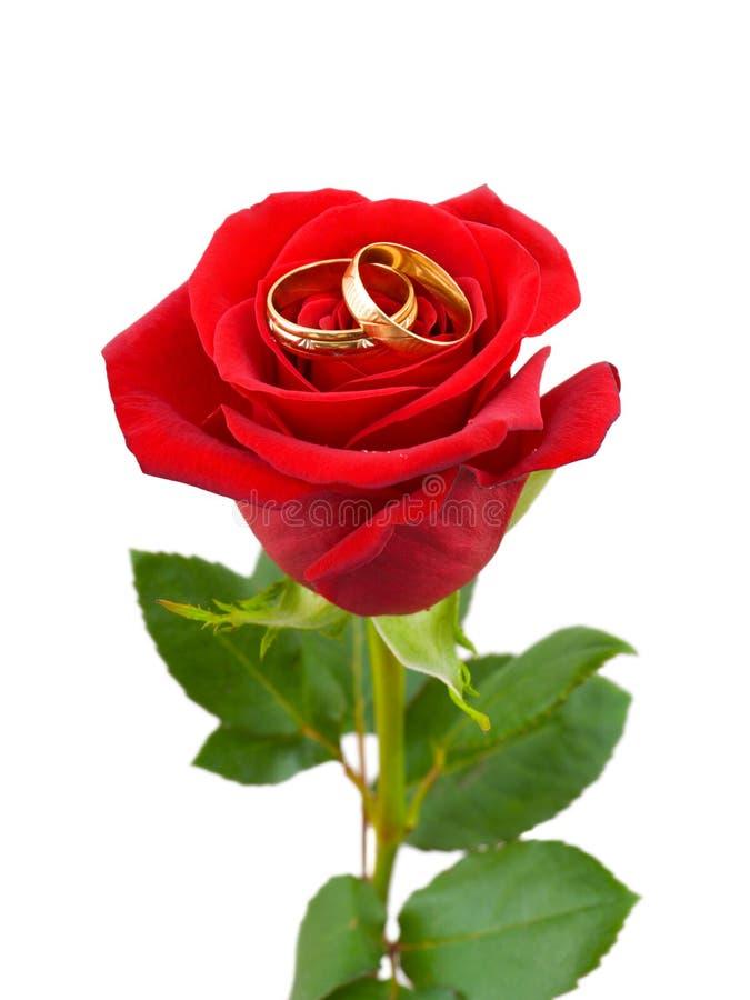 Rose y anillos de bodas fotos de archivo