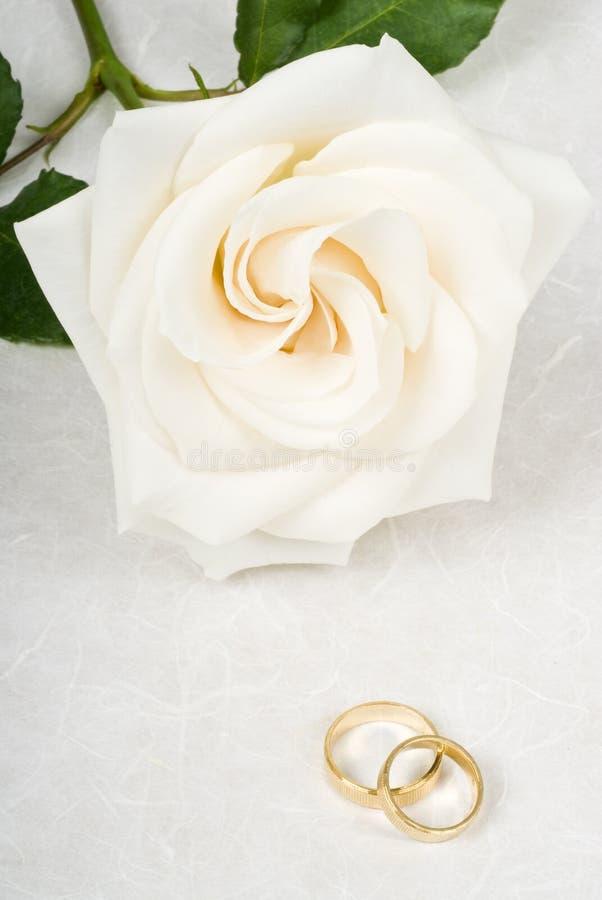 Rose y anillos de bodas blancos en el papel Textured imagen de archivo libre de regalías