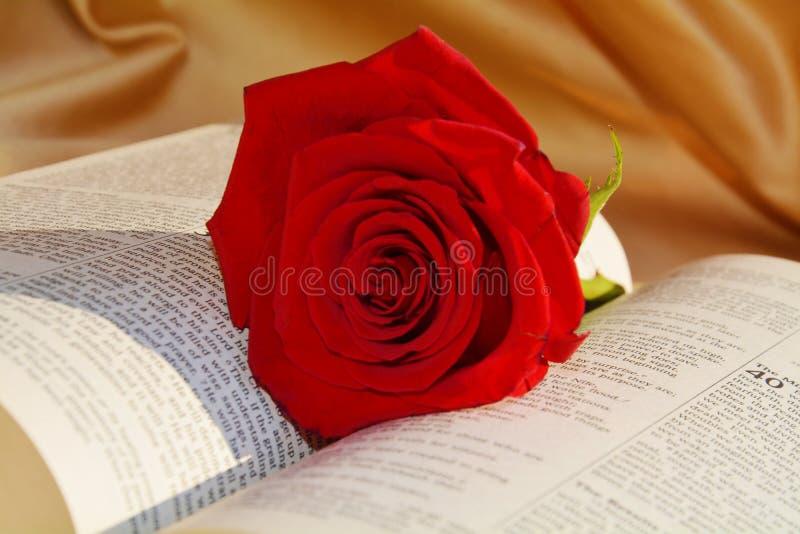 Rose y biblia, concepto del amor, cierre para arriba fotografía de archivo