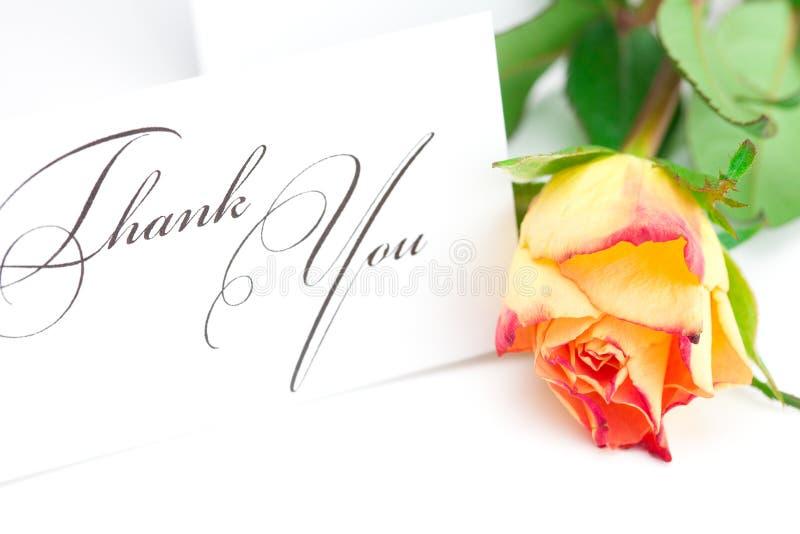 Rose y una tarjeta le agradecen aislaron encendido imagen de archivo libre de regalías