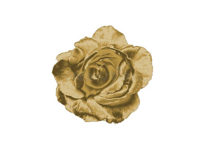 rose złota obraz stock