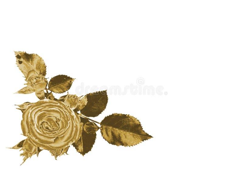 rose złota zdjęcia royalty free