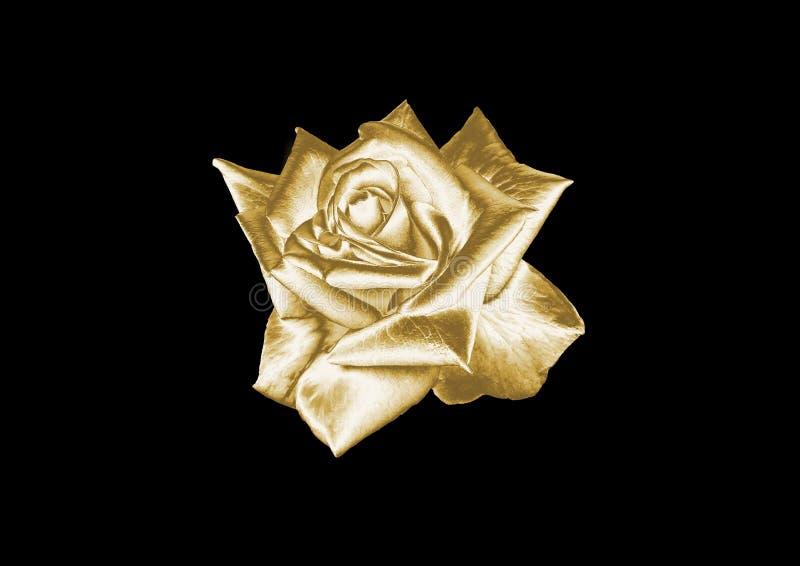 rose złota zdjęcia stock