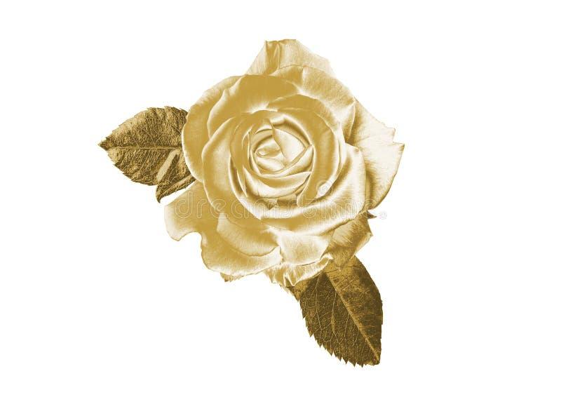 rose złota obrazy stock