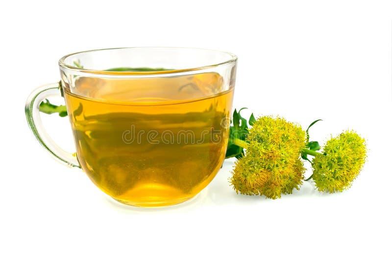 Rosea de Rhodiola del té herbario y de las flores fotografía de archivo