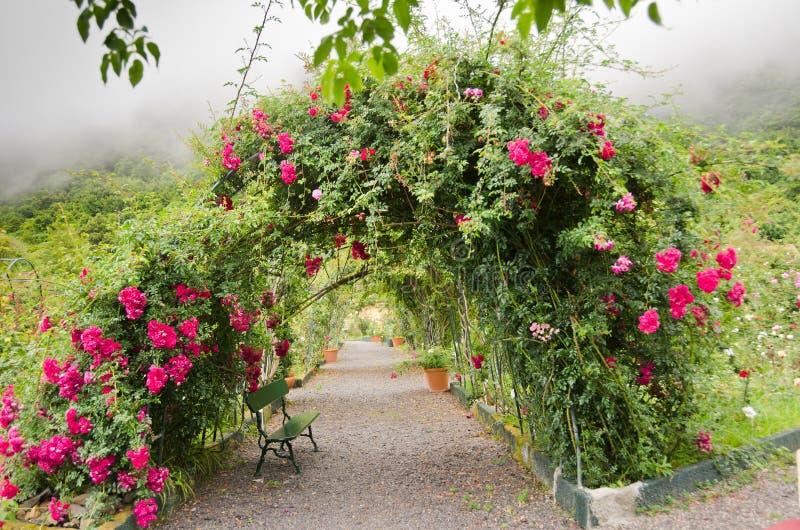 Rosearch Romantical na névoa de Madeira imagens de stock royalty free