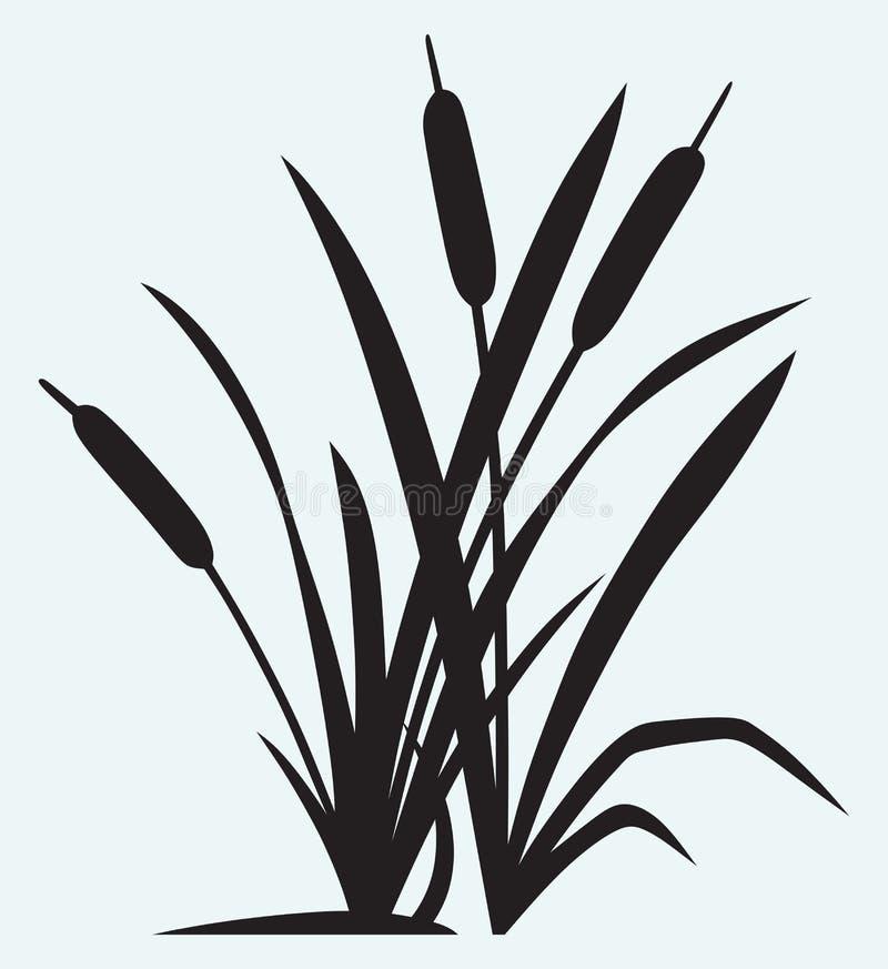 Roseau de silhouette illustration de vecteur