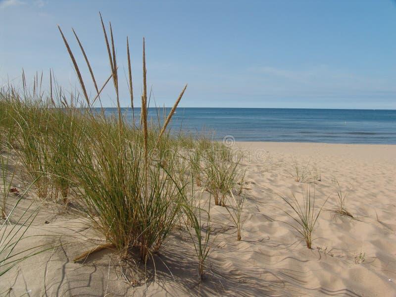 Roseau des sables photographie stock libre de droits