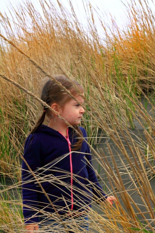 Roseau des sables l'explorant images libres de droits