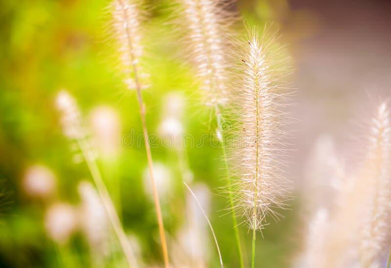 Roseaux d'usine en nature verte photo stock