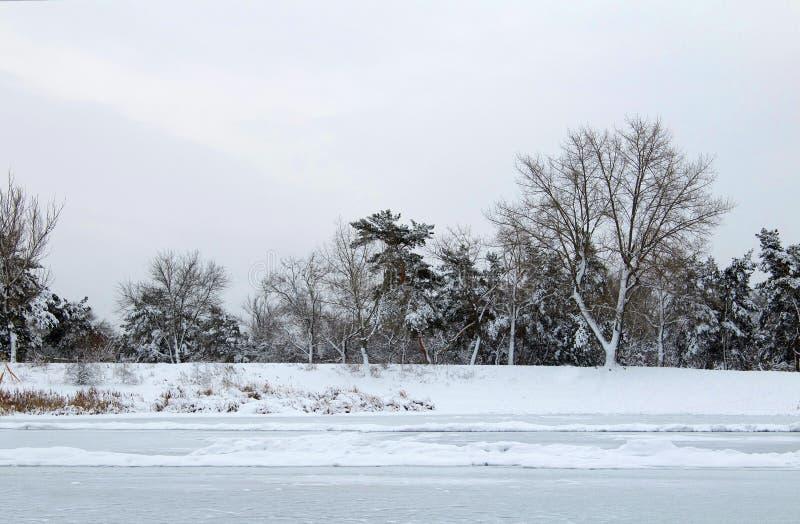 Roseaux dans le premier plan Berge congelée d'hiver photographie stock libre de droits