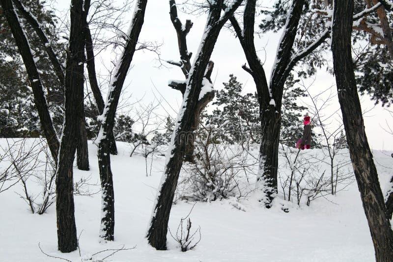 Roseaux dans le premier plan Berge congelée d'hiver images libres de droits