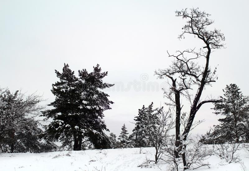 Roseaux dans le premier plan Berge congelée d'hiver photographie stock