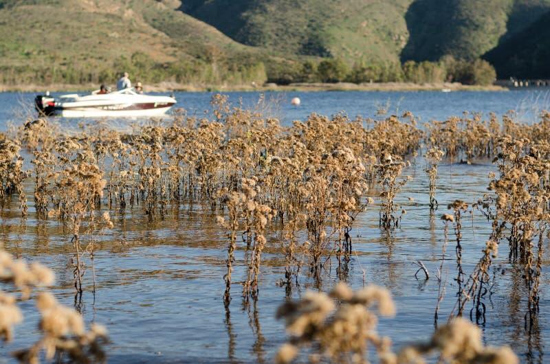 Roseaux dans un lac images libres de droits