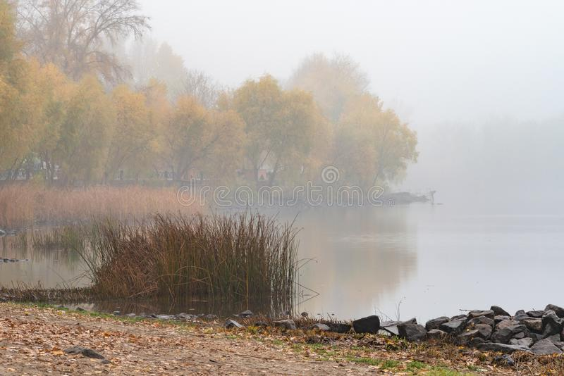 Roseaux et arbres près de la rivière de Dnieper à Kiev, Ukraine Un matin doux d'automne, brume au-dessus de l'eau froide et calme photographie stock libre de droits