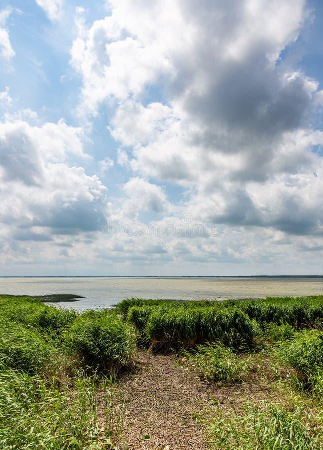 Roseaux et cumulus sur la côte de la lagune de Curonian, Russie photographie stock