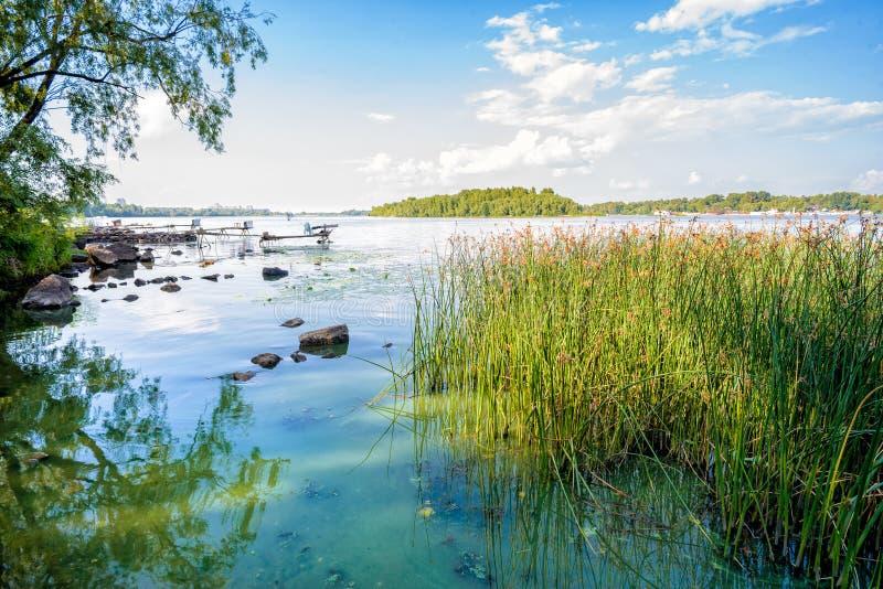 Roseaux et rivière de Dnieper photographie stock