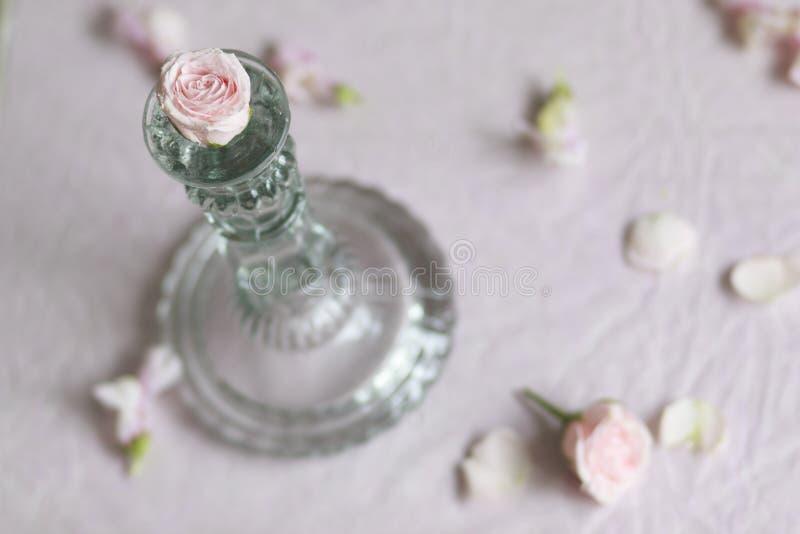Rosebud avec le chandelier photo stock