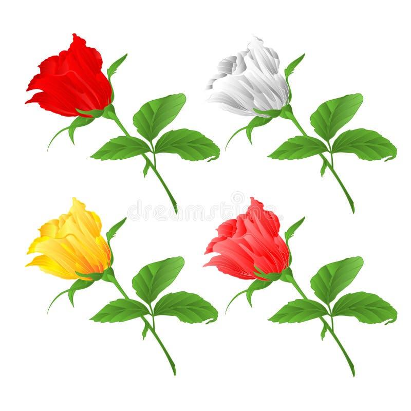 Rosebud het vastgestelde rode takje van wite gele en roze rozen met bladeren op een witte uitstekende vector editable illustratie royalty-vrije illustratie