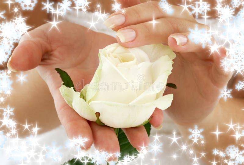 Rosebud met sneeuwvlokken stock afbeelding
