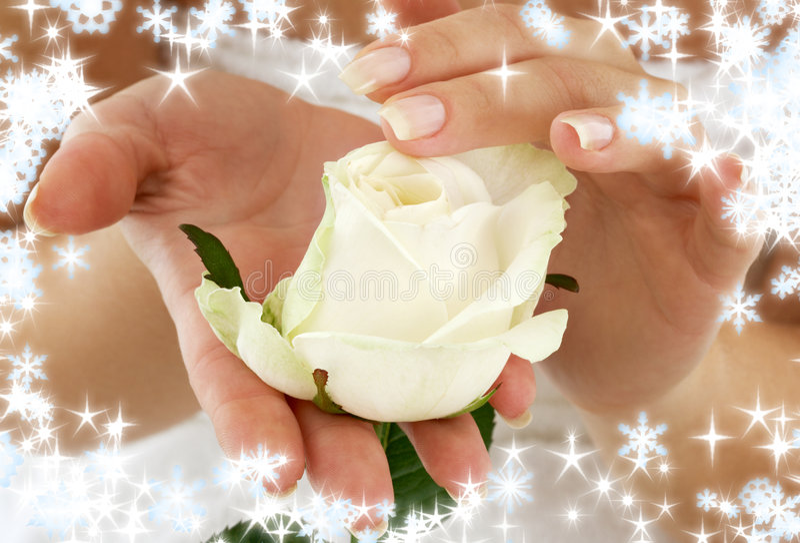 Rosebud mit Schneeflocken stockbild