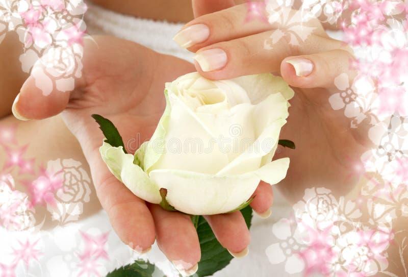 Rosebud umgeben durch Blumen lizenzfreie stockfotos