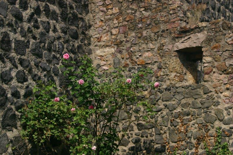 Download Rosebush stockfoto. Bild von blätter, ziegelstein, felsen - 168296