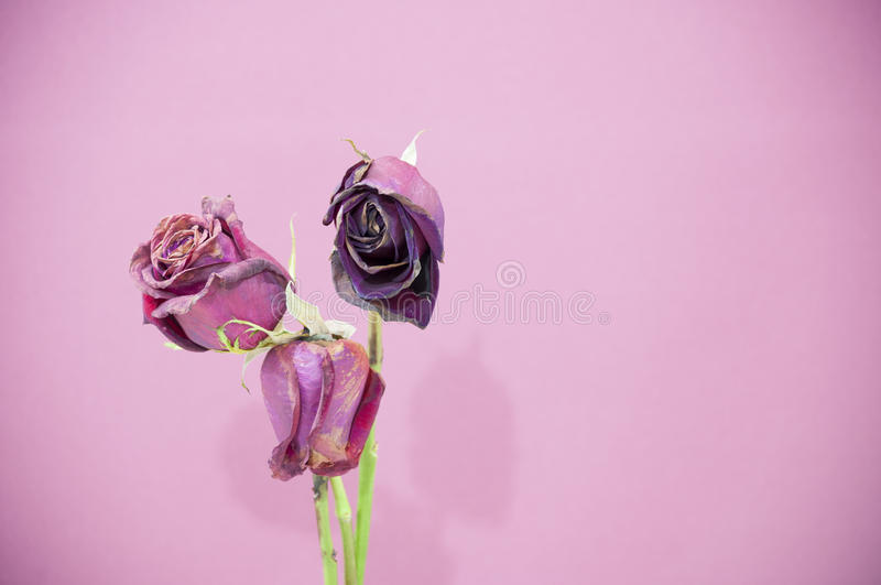Rosee stock image