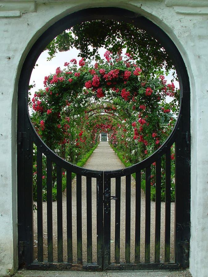 Rosegarden stock photos