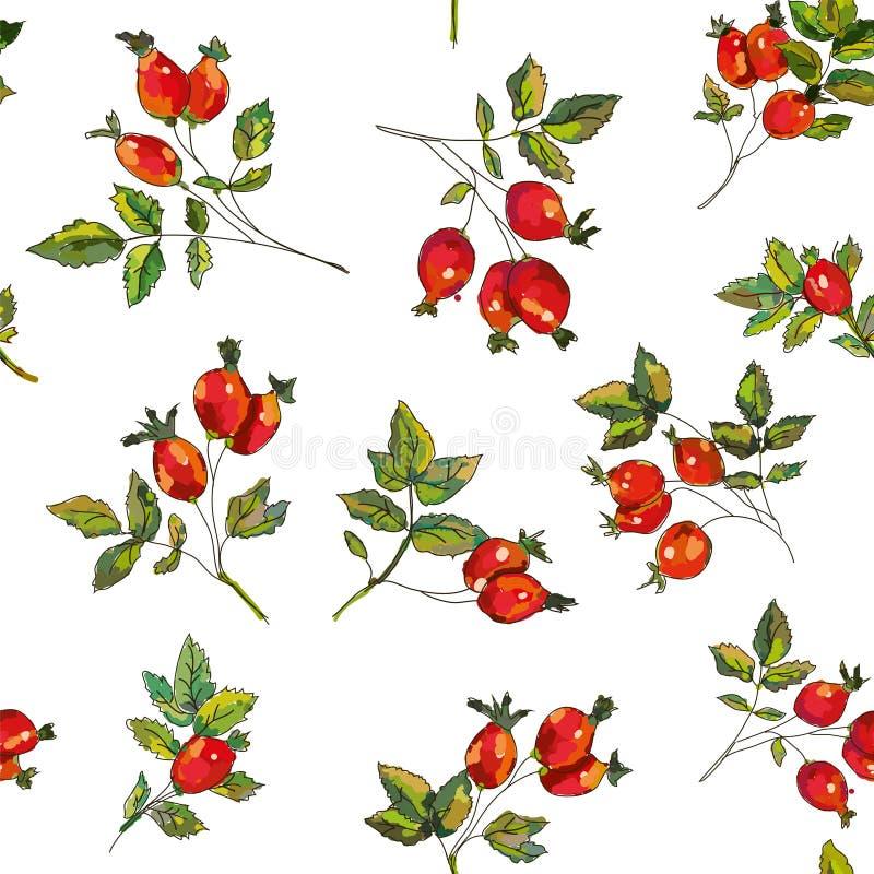 Rosehip seamless pattern for tea. Vector illustration vector illustration