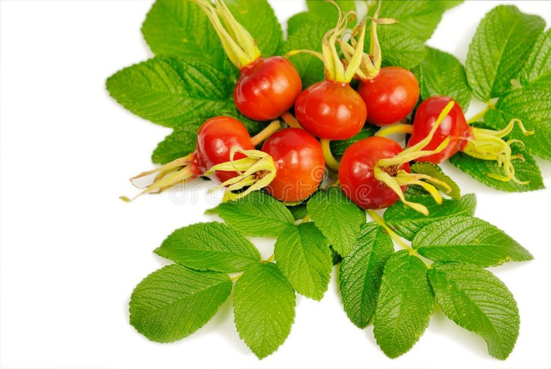 Download Rosehips Stock Photos - Image: 6505693