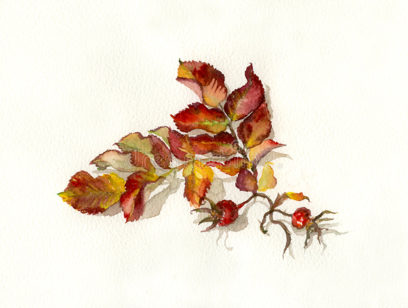 Rosehips Watercolor Painting Stock Photography