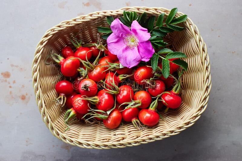 Rosehips and a wild rose flower stock photo