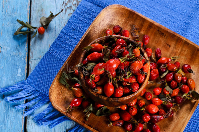 Rosehips royalty free stock image