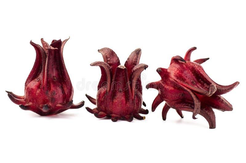 roselle fresco fotografia de stock
