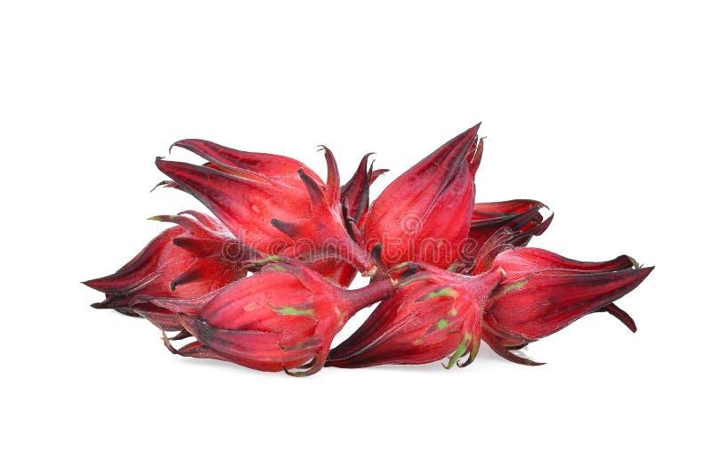 Roselle fresco isolado no branco fotos de stock
