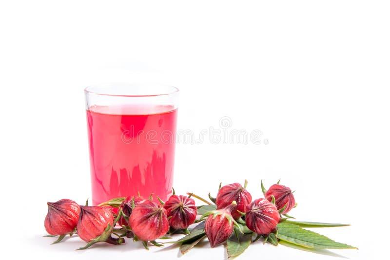 Roselle owoc i czerwona woda w szkle na białym tle obrazy stock