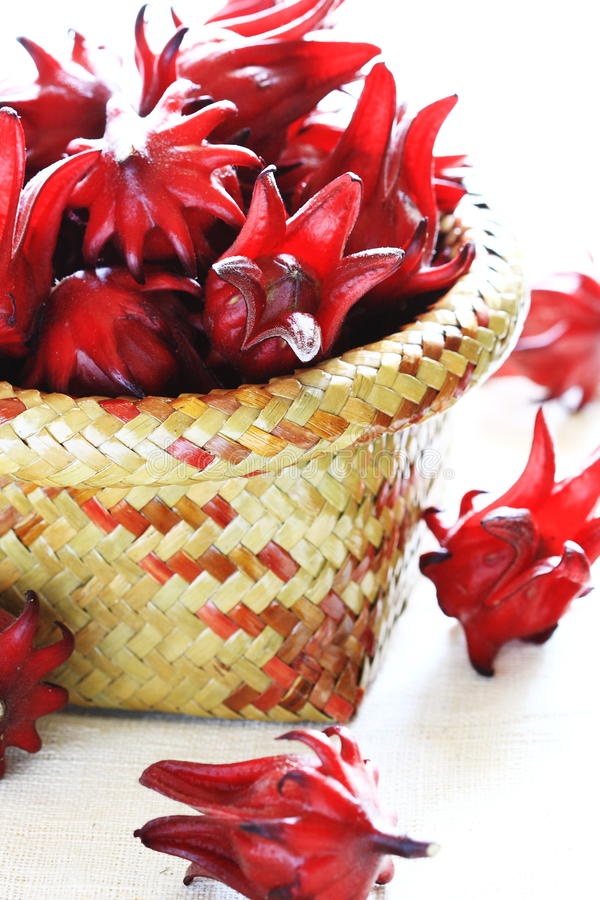 Free Roselle Red Stock Photography - 11614882