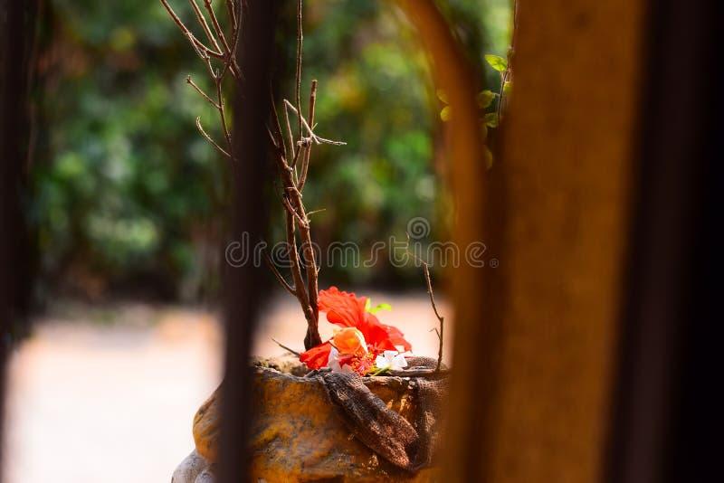 Rosemallow kwiat dla tło tapety zdjęcie royalty free