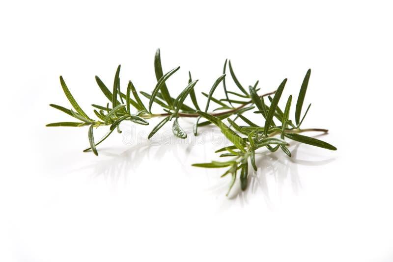 Download Rosemary stock foto. Afbeelding bestaande uit aroma, plantaardig - 10775052
