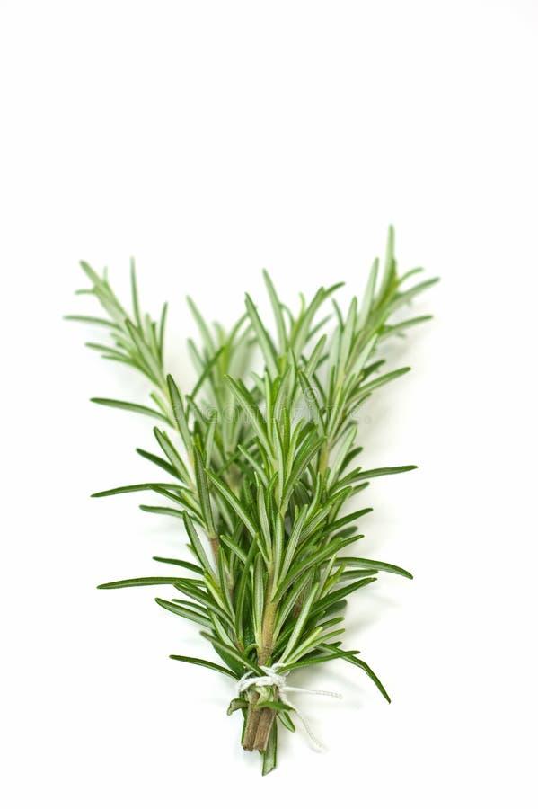 Download Rosemary stock photo. Image of green, food, seasoning - 13269512