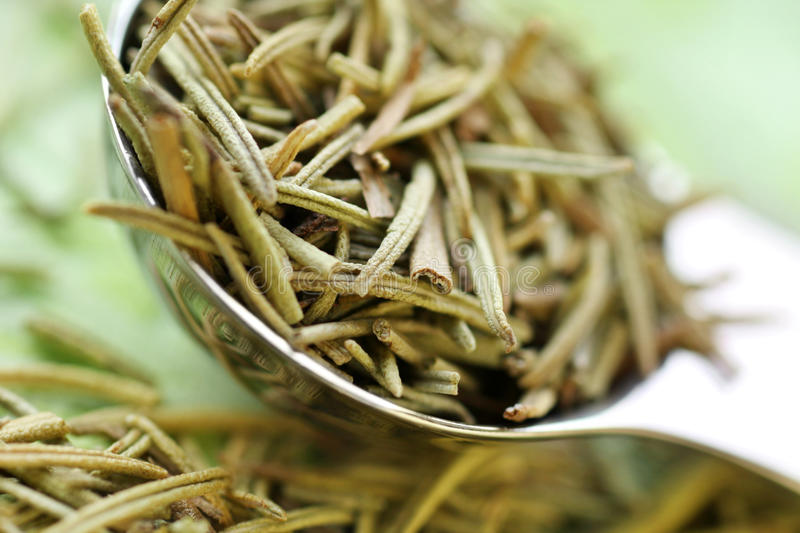 Download Rosemary Stock Photos - Image: 13437413