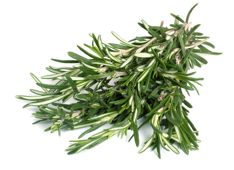 Rosemary stock fotografie
